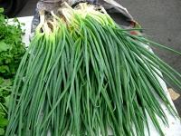 Зеленый лук - польза и вред
