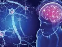 Как восстановить клетки мозга - 5 полезных привычек