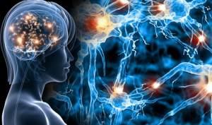Как восстановить клетки мозга