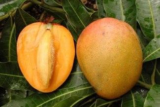 Тропический фрукт манго